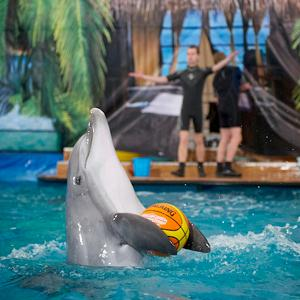 Дельфинарии, океанариумы Бронниц