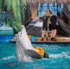 Дельфинарии, океанариумы в Бронницах