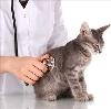 Ветеринарные клиники в Бронницах
